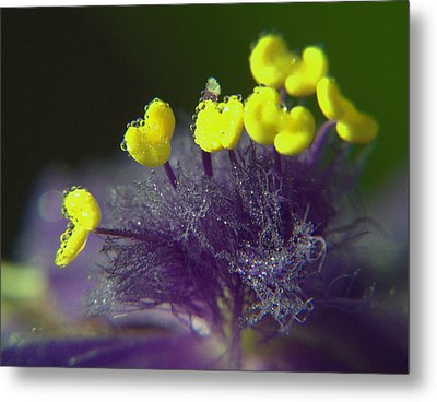 Metal Print featuring the photograph Spiderwort Bubbles by Suzy Piatt