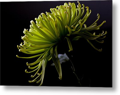 Metal Print featuring the photograph Spike by Sennie Pierson