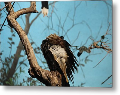 Spiky Bird Metal Print