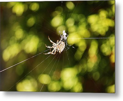 Spins A Web Metal Print by Al Fritz