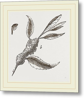 Spit Frog-hopper And Larva Metal Print by Litz Collection