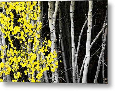 Splash Of Gold Metal Print by The Forests Edge Photography - Diane Sandoval