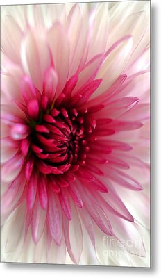 Splash Of Pink Metal Print by Deb Halloran