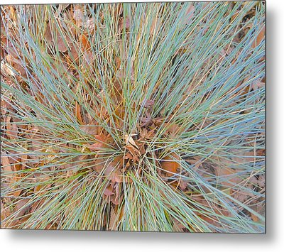 Splendor In The Grass Metal Print