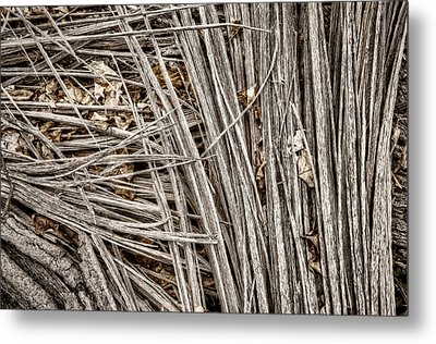 Splinters Metal Print by Scott Norris