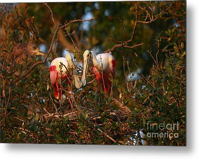 Metal Print featuring the photograph Spoonbill Love Nest by John F Tsumas