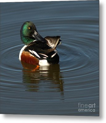 Metal Print featuring the photograph Spooney by Bob and Jan Shriner