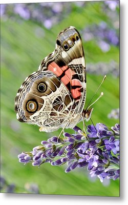 Spotted Butterfly Metal Print by Kim Bemis