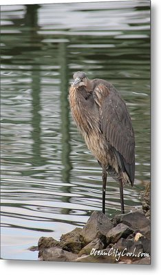 Metal Print featuring the photograph Spotted By A Great Blue Heron by Robert Banach