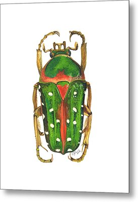 Spotted Flour Beetle Metal Print by Cindy Hitchcock