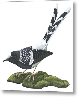 Spotted Forktail Metal Print by Anonymous