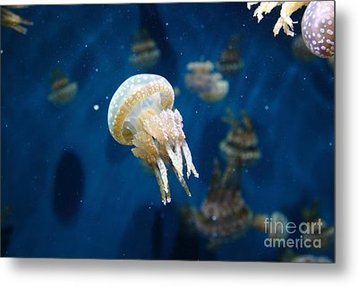 Spotted Jelly Fish 5d24950 Metal Print by Wingsdomain Art and Photography