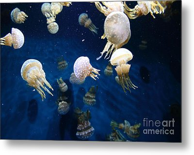 Spotted Jelly Fish 5d24951 Metal Print by Wingsdomain Art and Photography