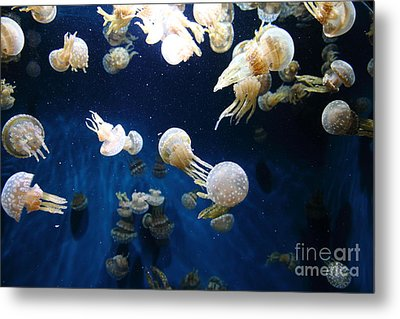 Spotted Jelly Fish 5d24952 Metal Print by Wingsdomain Art and Photography