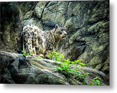 Metal Print featuring the photograph Spotty Thoughts by Glenn Feron