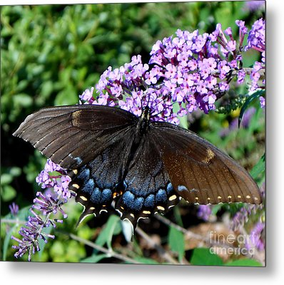 Spread Your Wings And Fly Metal Print by Eva Thomas