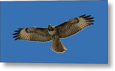Spread Your Wings  Metal Print by Christy Pooschke