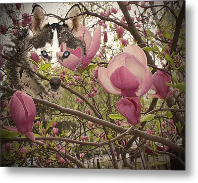 Spring And Beauty Metal Print by Georgeta Blanaru