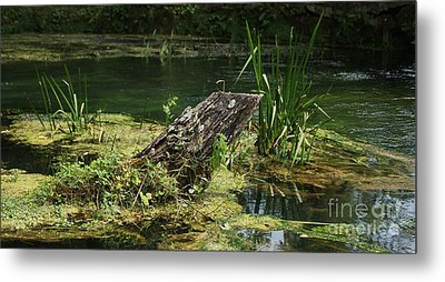 Metal Print featuring the photograph Spring At Hodgson Mill by Julie Clements