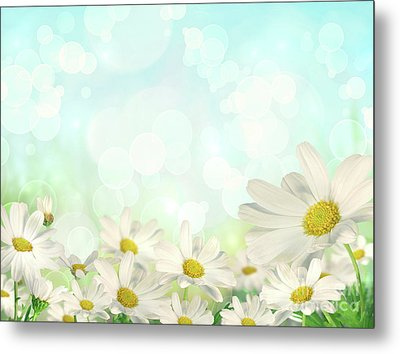 Spring Background With Daisies Metal Print