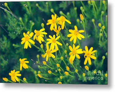 Spring Metal Print by Barbara Shallue