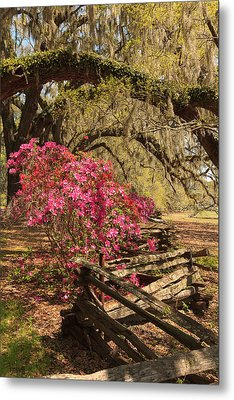Metal Print featuring the photograph Spring Beauty by Patricia Schaefer