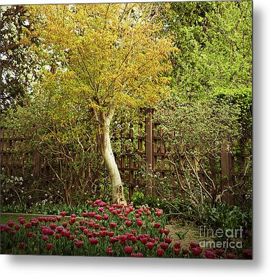 Tiptoe Thru The Tulips Metal Print