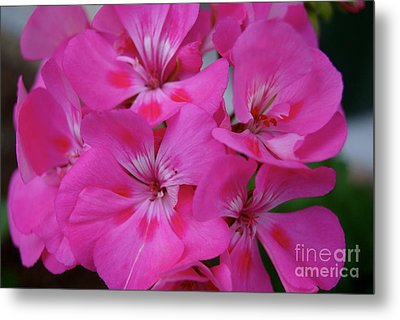 Spring Birth Metal Print