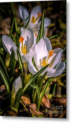 Spring Bloom Metal Print by Julie Palencia