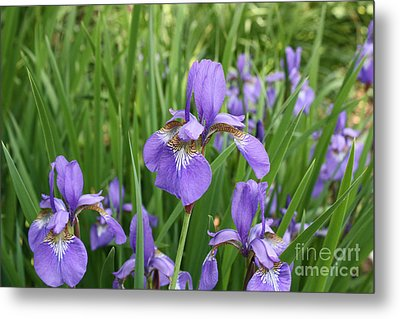 Metal Print featuring the photograph Spring Bloom by Paul Cammarata