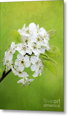 Spring Blooms Metal Print by Darren Fisher