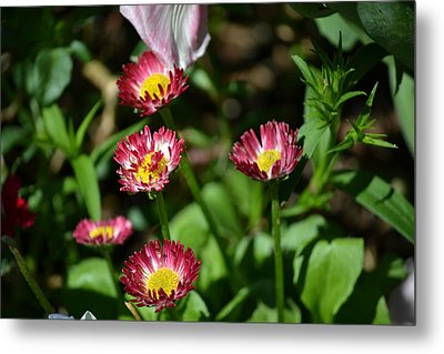 Metal Print featuring the photograph Spring Blooms by Tara Potts