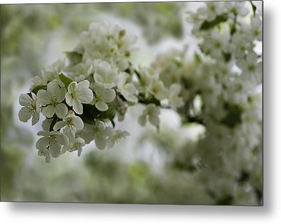 Metal Print featuring the photograph Spring Bloosom by Sebastian Musial