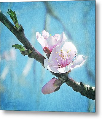 Metal Print featuring the photograph Spring Blossom by Jocelyn Friis