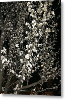 Spring Blossoms Glowing Metal Print