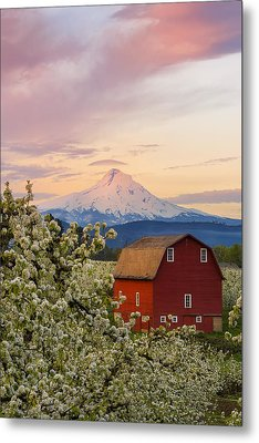 Spring Blossoms Sunrise Metal Print