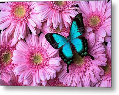 Spring Blue Butterfly Metal Print by Garry Gay