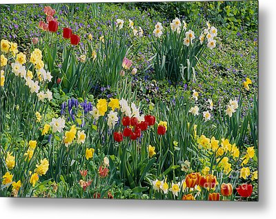 Metal Print featuring the photograph Spring Bulb Garden by Alan L Graham