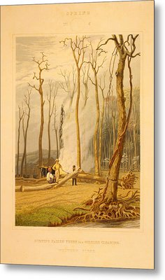 Spring--burning Fallen Trees In A Girdled Clearing--western Metal Print by Litz Collection