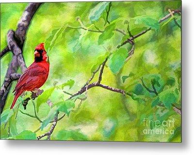 Spring Cardinal Metal Print by Darren Fisher