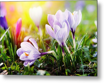 Metal Print featuring the photograph Spring by Christine Sponchia