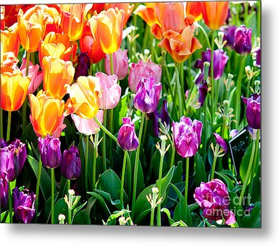 Spring Color Metal Print by Shijun Munns