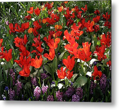 Spring Colors Metal Print by John Freidenberg