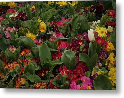 Spring Colour IIi Metal Print by Maeve O Connell