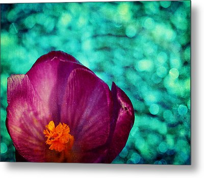 Metal Print featuring the photograph Spring Crocus by Peggy Collins