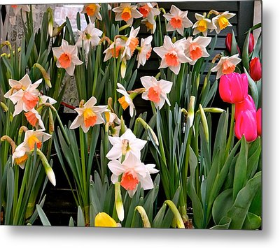 Metal Print featuring the photograph Spring Daffodils by Ira Shander