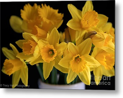 Spring Daffodils Metal Print by Tracy  Hall