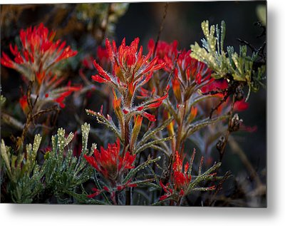 Spring Dew Paintbrush Metal Print
