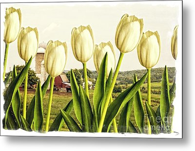 Spring Down On The Farm Metal Print by Edward Fielding