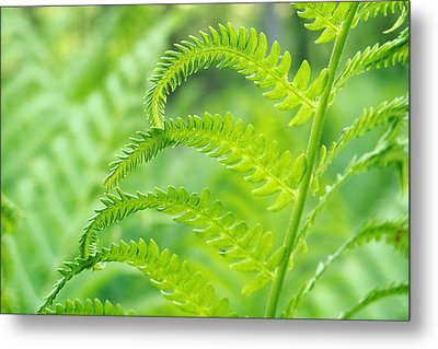 Metal Print featuring the photograph Spring Fern by Lars Lentz